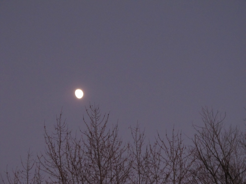 Moon and Trees
