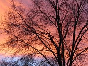 November - Dec 2011 012