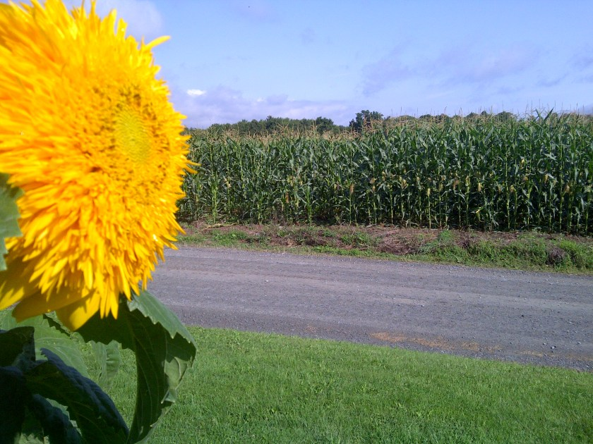 Good Seed in Good Soil